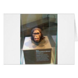Australopithecus africanus; museum exhibit greeting card
