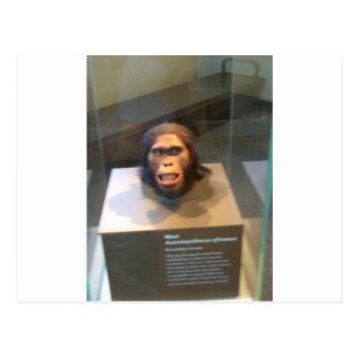 Australopithecus africanus; museum exhibit postcard