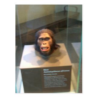 Australopithecus africanus; museum exhibit post card