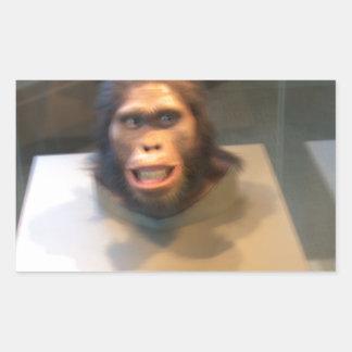Australopithecus africanus; museum exhibit rectangular sticker