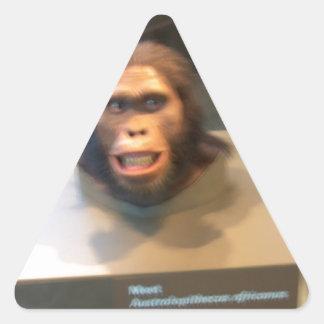 Australopithecus africanus; museum exhibit triangle sticker