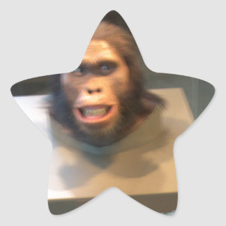 Australopithecus africanus; museum exhibit star sticker