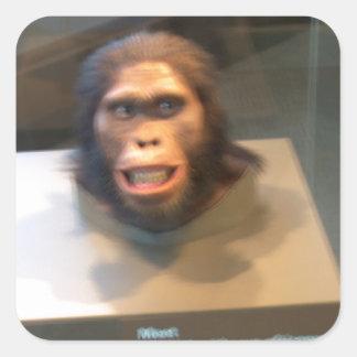 Australopithecus africanus; museum exhibit square sticker