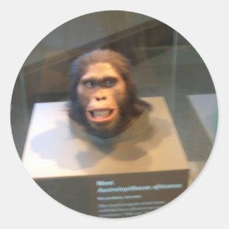 Australopithecus africanus; museum exhibit classic round sticker