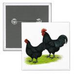 Australorp Black Chickens 2 Inch Square Button