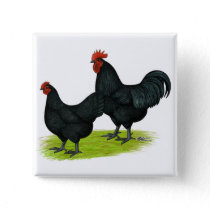 Australorp Black Chickens Button