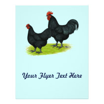 Australorp Black Chickens Flyer