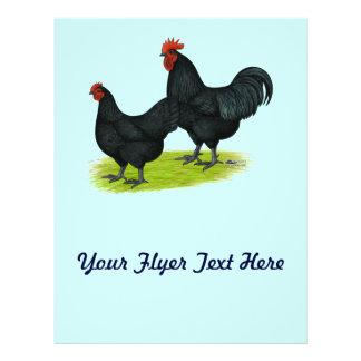 Australorp Black Chickens Flyer Design