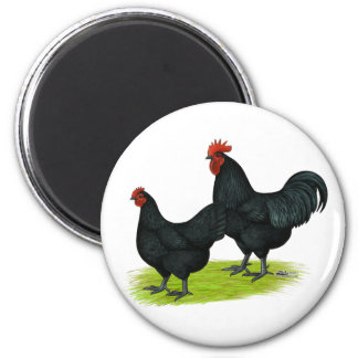 Australorp Black Chickens Refrigerator Magnets
