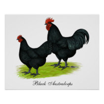 Australorp Black Chickens Poster