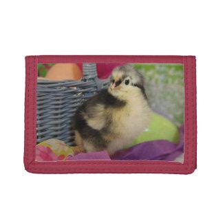 Australorp Chick Wallet
