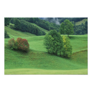 Austria. Rolling green hillside and trees Poster