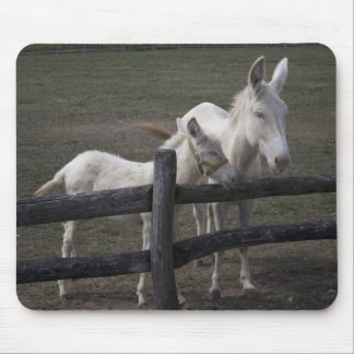 Austrian-Hungarian White Donkeys Mouse Pad