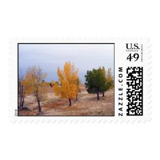 Autmn Trees Stamp