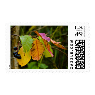 Autmun Leaves in Transition Stamp