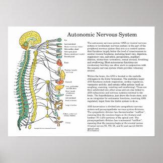 Autonomic Nervous System ANS Poster