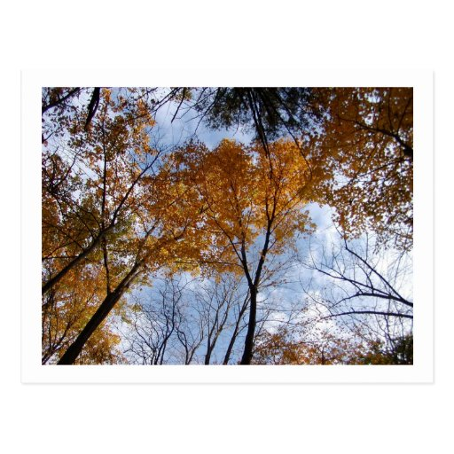 Autum Colors and Sky Postcard