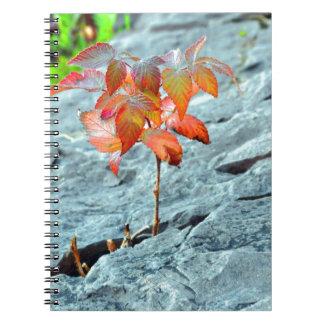 Autum en la roca libros de apuntes