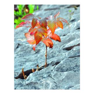 Autum en la roca plantillas de membrete