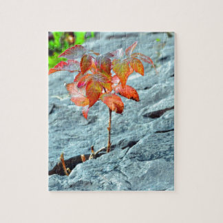 Autum en la roca puzzle con fotos