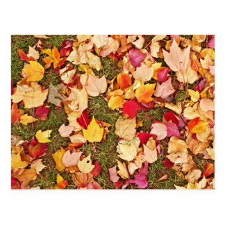 Autum Leaves On The Grass Background Postcard