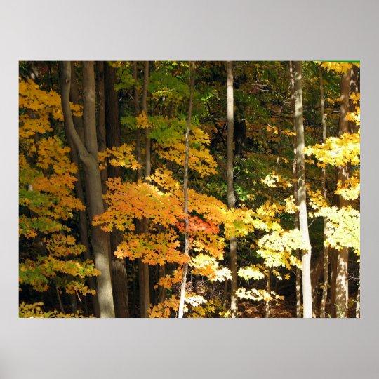 Autum Maples Landscape Poster