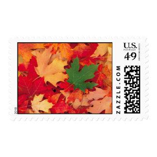 autumn (15) postage stamps