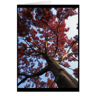 Autumn ~ 18 card
