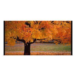 autumn 1 photo card