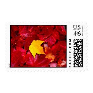 Autumn 1 postage