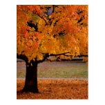 autumn (1) postcard