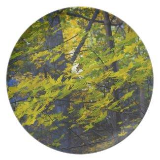 Autumn 6 plates