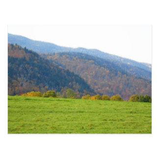Autumn Adirondacks Trees Scene Landscape Post Cards