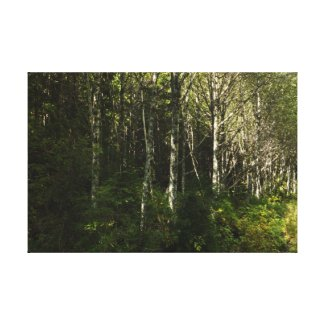 Autumn Alder Canvas Print