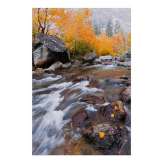 Autumn along Bishop Creek, CA Poster