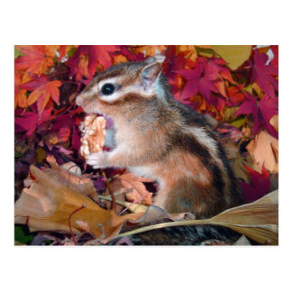 Autumn and chipmunk (photo) postcard