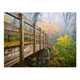 Autumn Appalachian Hiking Trail Postcard