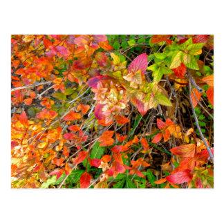 """autumn arrival"" postcard"