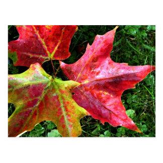 Autumn Arrives Postcard