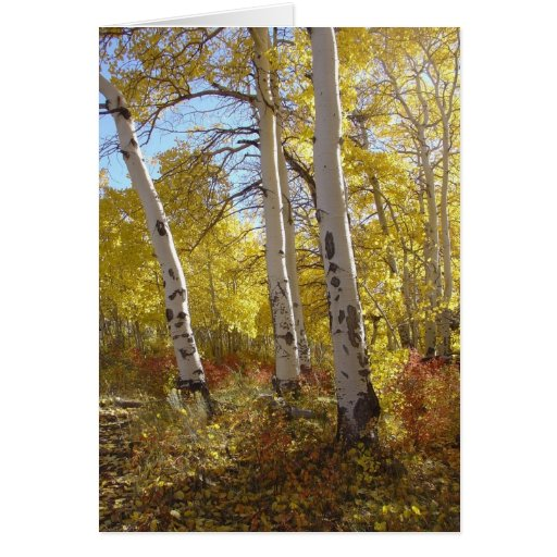 Autumn Aspen All Occasion Greeting Card