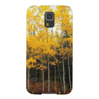 Autumn Aspen And Birch Denali Alaska Galaxy Nexus Covers