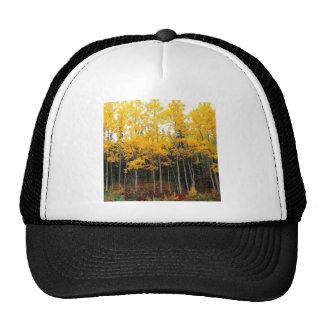 Autumn Aspen And Birch Denali Alaska Trucker Hat