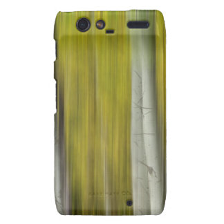Autumn Aspen Tree Trunks In Their Glory Dreaming Motorola Droid RAZR Cover