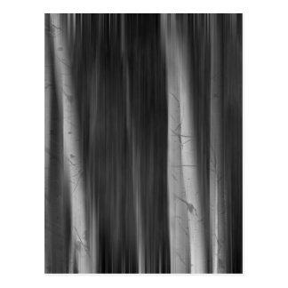 Autumn Aspen Trees Dreaming BW Postcard