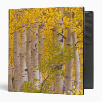 Autumn aspens in Kebler Pass in Colorado. Binder