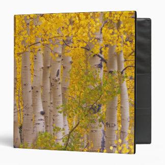 Autumn aspens in Kebler Pass in Colorado. Binder
