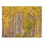 Autumn aspens in Kebler Pass in Colorado Panel Wall Art