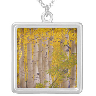 Autumn aspens in Kebler Pass in Colorado. Silver Plated Necklace
