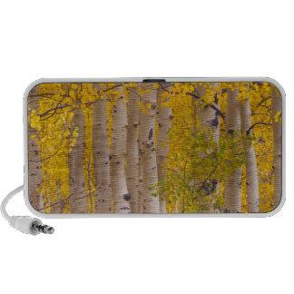 Autumn aspens in Kebler Pass in Colorado. Speaker System