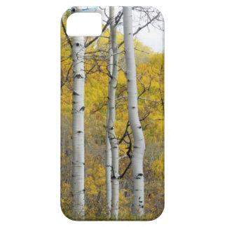 Autumn Aspens iPhone 5 Cases